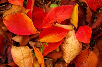 fallen_leaves.jpg