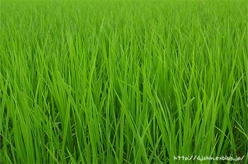 fresh_green.jpg