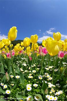 power_of_tulip.jpg