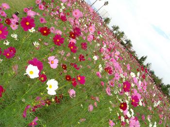 071013awaji_c.jpg