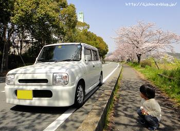 lapin_sakura_with-me.jpg